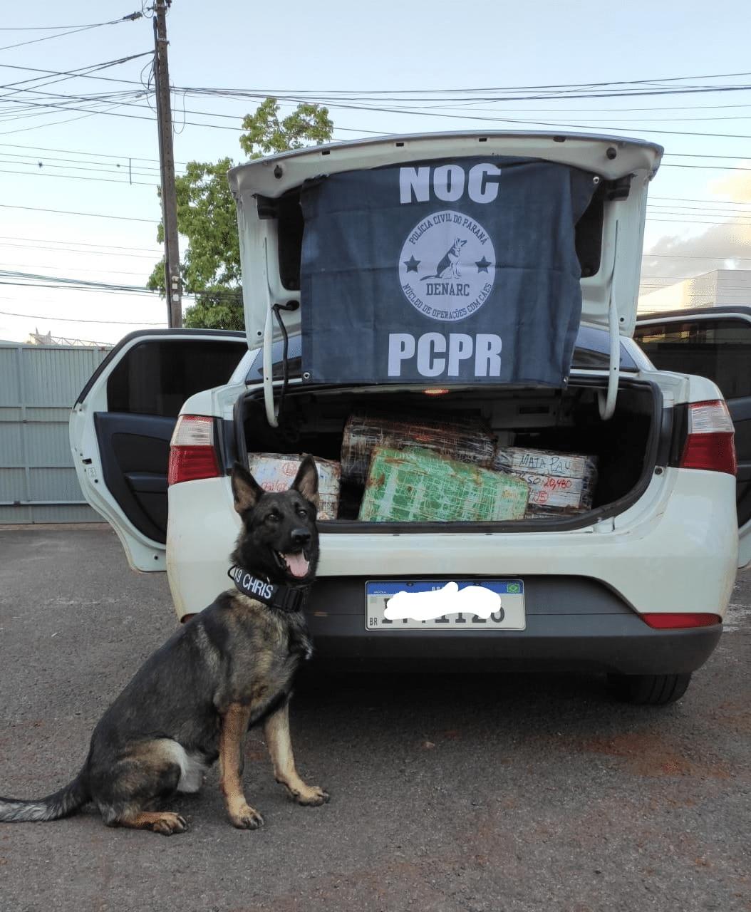 CHRIS. Agente canino do NOC ajudou a apreender 11kg de crack em sua primeira operação. – Divulgação