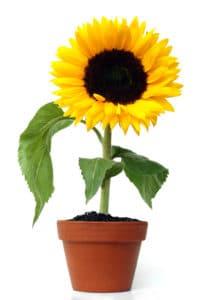 Desejos da Semana - Decoração com Flores!