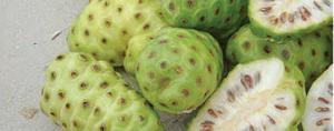 Fruto ajuda a tratar câncer, diabetes e doenças autoimunes, além de prevenir envelhecimento