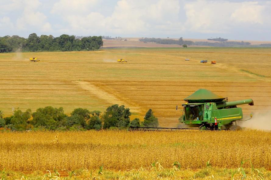 Safra de grãos de verão pode ser afetada pela excessiva chuva do mês de janeiro