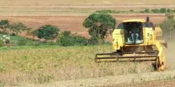 MERCADO. A preocupação  dos produtores é com o comportamento climático da safra daqui em diante. FOTO-DIVULGAÇÃO