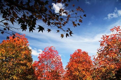Neutralidade no outono pode favorecer cereais de inverno na Região Sul
