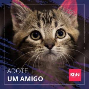 Pets Sem Fronteiras por Andre Sanseverino