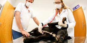 Vacinação em pets: qual a importância?