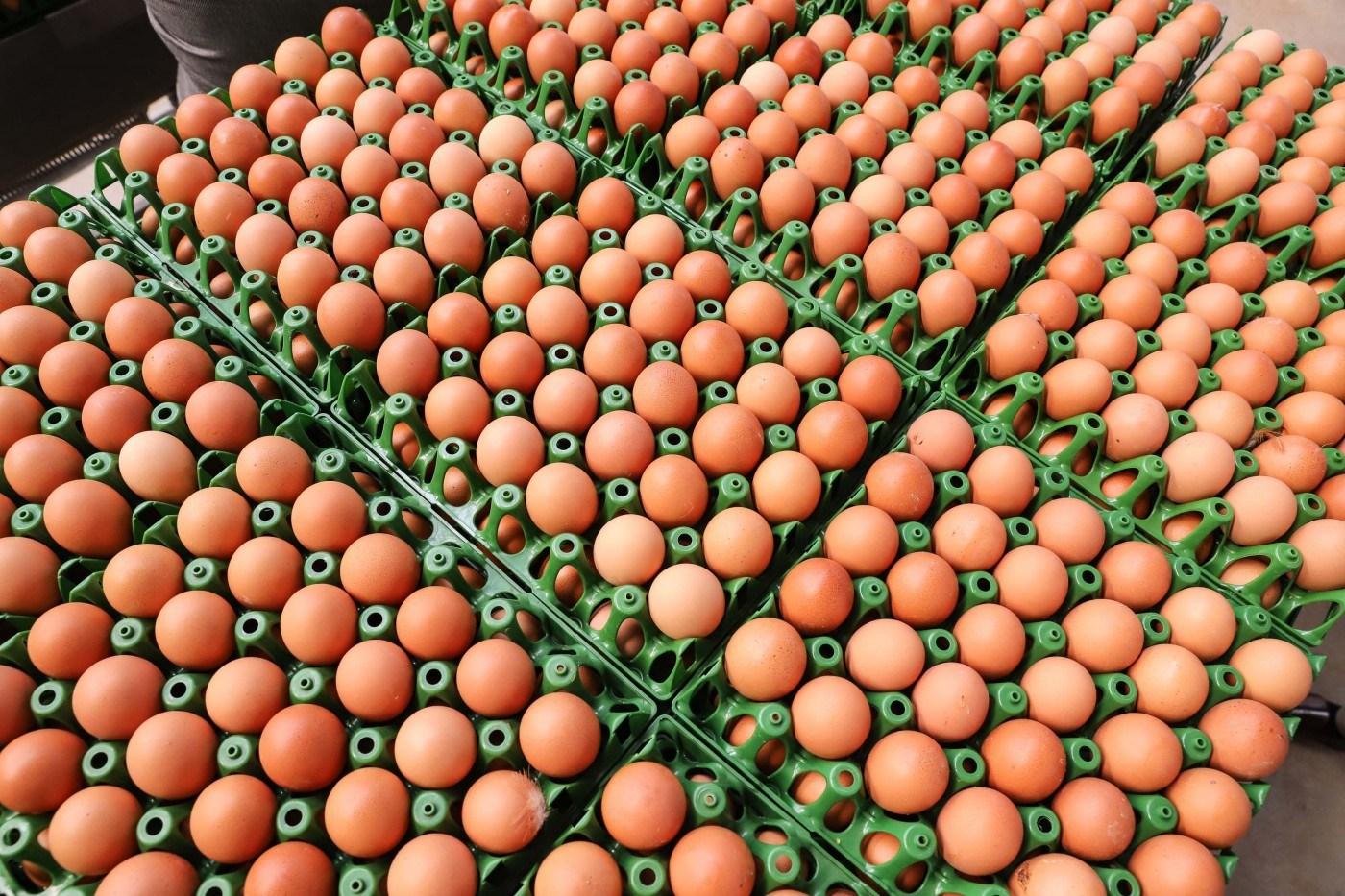 Exportações de ovos mantém alta de 145,1% no primeiro semestre de 2021