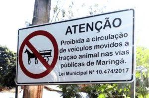 Carroças: a crueldade que deixou de existir em Maringá