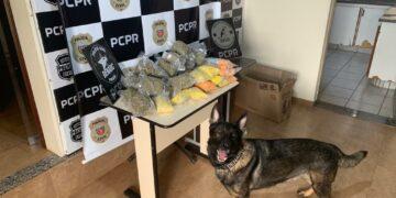 Droga de 'playboy'! Rapaz é preso com 12 mil comprimidos de ecstasy em Maringá