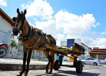 Vereadores aprovam Projeto de Lei que proíbe carroças na área urbana em Sarandi