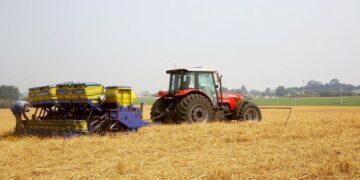 Plantio da primeira safra de milho: produtores esperam colher 4,1 milhões de toneladas