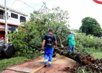 Equipes da Prefeitura de Maringá continuam no atendimento das chamadas da população após danos do temporal