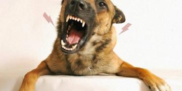 Qual a importância do cão ambientado?