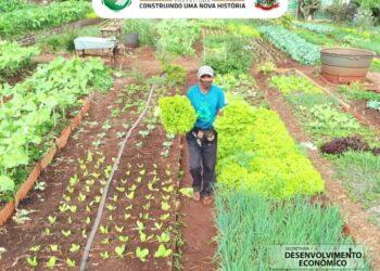 Hortas Comunitárias já estão disponíveis em Sarandi