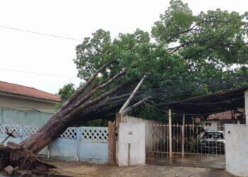 Com vento e chuva forte, sete árvores são derrubadas em Sarandi