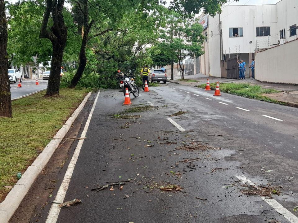 Vento forte e chuva derruba árvore sobre carro